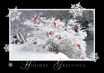 Riverfront Rest Holiday Cards